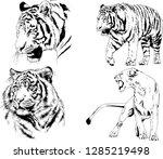 vector drawings sketches... | Shutterstock .eps vector #1285219498