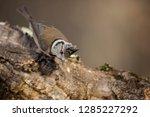 bird in nature | Shutterstock . vector #1285227292