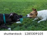 black and white dog with blue... | Shutterstock . vector #1285309105
