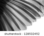 bird wing pattern feather texture - stock photo