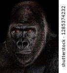 Intimate Gorilla Portrait