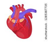 vector design of anatomy and... | Shutterstock .eps vector #1285387735