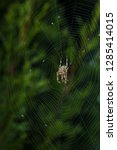 spider with shaggy paws in the...   Shutterstock . vector #1285414015