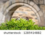 a male and a female house... | Shutterstock . vector #1285414882
