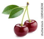 sweet ripe cherries with leaves ... | Shutterstock . vector #1285418248