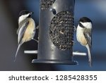 a pair of black capped... | Shutterstock . vector #1285428355