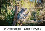 a close up photo of a beautiful ... | Shutterstock . vector #1285449268