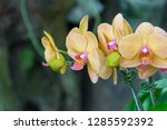 orchidseveral colors ...   Shutterstock . vector #1285592392