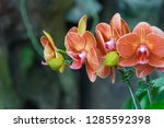 orchidseveral colors ...   Shutterstock . vector #1285592398