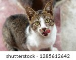 cute cat with open mouth... | Shutterstock . vector #1285612642