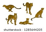 Set Of Cheetahs  Acinonyx...