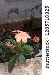 natural  beautiful  earth    Shutterstock . vector #1285710325