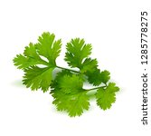 parsley low poly. fresh green... | Shutterstock . vector #1285778275