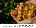 physalis inca golden berries in ...   Shutterstock . vector #1285856338