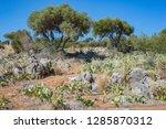 cactus meadow wild garden...   Shutterstock . vector #1285870312