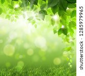 green leaves and shining... | Shutterstock . vector #1285979965