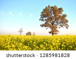 colorful autumn.lithuania... | Shutterstock . vector #1285981828