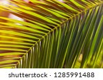 green palm leaf on a sunset...   Shutterstock . vector #1285991488