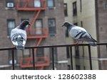 New York Pigeons Sitting On...