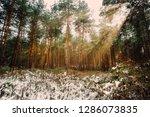 dreamy landscape with winter... | Shutterstock . vector #1286073835