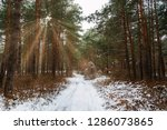 road in winter forest and... | Shutterstock . vector #1286073865