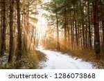 road in winter forest and... | Shutterstock . vector #1286073868