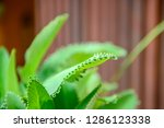 close up green leaves of...   Shutterstock . vector #1286123338