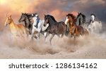Stock photo horse herd run gallop in desert dust against dramatic sky 1286134162