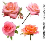 Stock photo set roses flowers it is isolated on white background 128622242