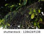 blurred images of spider webs...   Shutterstock . vector #1286269138