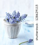 Bunch Of Grape Hyacinths In A...