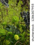 various flowers in different...   Shutterstock . vector #1286307955