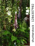 various flowers in different...   Shutterstock . vector #1286307982
