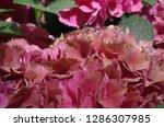 various flowers in different...   Shutterstock . vector #1286307985