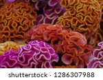various flowers in different...   Shutterstock . vector #1286307988