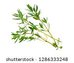 Savory Bunch Isolated On White...