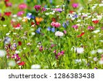 Flower Meadow In Summer With...