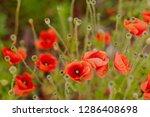 floral natural garden   Shutterstock . vector #1286408698