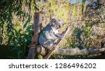 a close up photo of a beautiful ... | Shutterstock . vector #1286496202