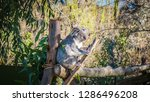 a close up photo of a beautiful ... | Shutterstock . vector #1286496208