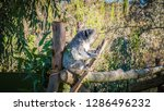 a close up photo of a beautiful ... | Shutterstock . vector #1286496232