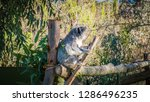 a close up photo of a beautiful ... | Shutterstock . vector #1286496235