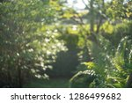 bokeh dharma  blurred leaves | Shutterstock . vector #1286499682