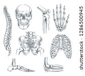 human skeleton  bones and... | Shutterstock .eps vector #1286500945