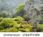 green nature garden and steam.   Shutterstock . vector #1286592388