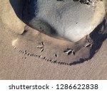 tiny bird footprints on beach... | Shutterstock . vector #1286622838