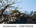 plum blossoms around osaka... | Shutterstock . vector #1286730328