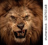Stock photo close up shot of roaring lion 128702168