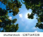 tree tops and blue sky | Shutterstock . vector #1287169228