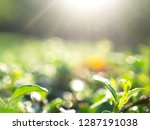 close up of abstract nature...   Shutterstock . vector #1287191038